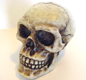 Skull Gear Shift Knob - No Eyes